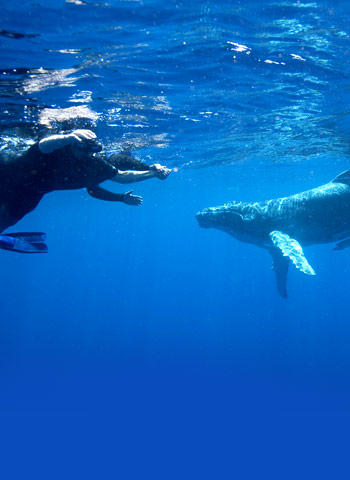 Pride of Maui Whale Watching Tour