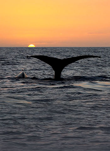 Sunset Whale Watch Cruise
